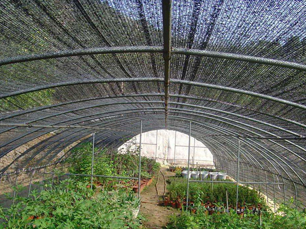 四川蔬菜大棚遮阳网